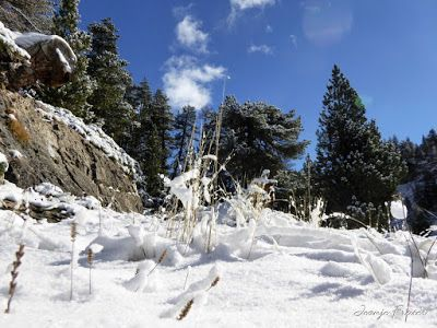 P1310049 - Primera nevada de noviembre en el Valle de Benasque.