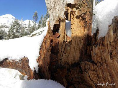 P1310050 - Primera nevada de noviembre en el Valle de Benasque.