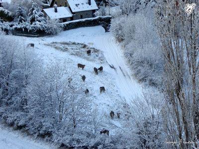 P1310368 - Abrimos oficialmente la temporada de skimo en Cerler.