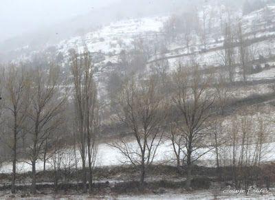 P1320640 - Ya tocaba, vuelve a nevar en Cerler, Valle de Benasque.
