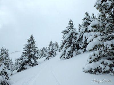 P1000561 - Powder day y caminatas buscando ...