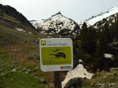 P1040821 - Romería en el Aneto, vistas desde Aigualluts, Pirineo.