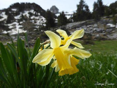 P1040878 - Romería en el Aneto, vistas desde Aigualluts, Pirineo.