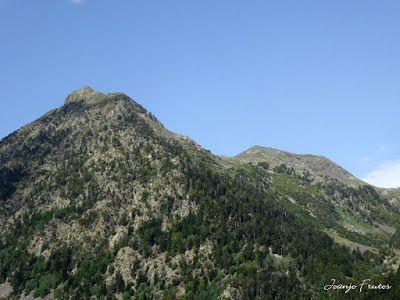 P1050737 - Botánico y Gorgues de Alba, Valle de Benasque (Pirineo)