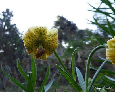 P1050739 - Botánico y Gorgues de Alba, Valle de Benasque (Pirineo)