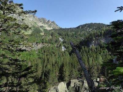 P1050740 - Botánico y Gorgues de Alba, Valle de Benasque (Pirineo)