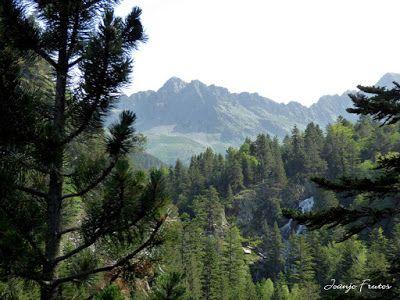 P1050749 - Botánico y Gorgues de Alba, Valle de Benasque (Pirineo)
