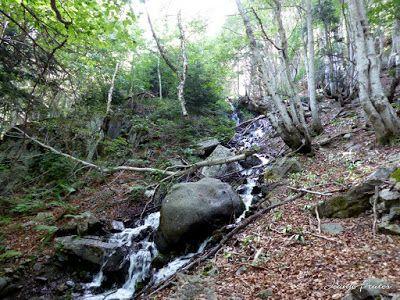 P1050753 - Botánico y Gorgues de Alba, Valle de Benasque (Pirineo)