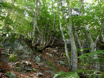 P1050766 - Botánico y Gorgues de Alba, Valle de Benasque (Pirineo)