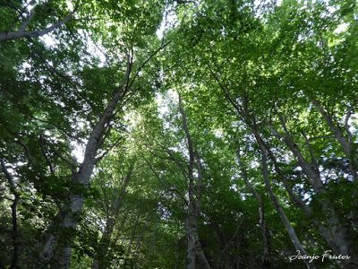 P1050773 - Botánico y Gorgues de Alba, Valle de Benasque (Pirineo)