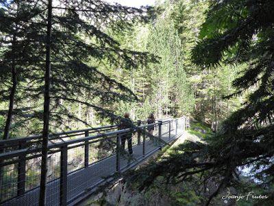 P1050778 - Botánico y Gorgues de Alba, Valle de Benasque (Pirineo)