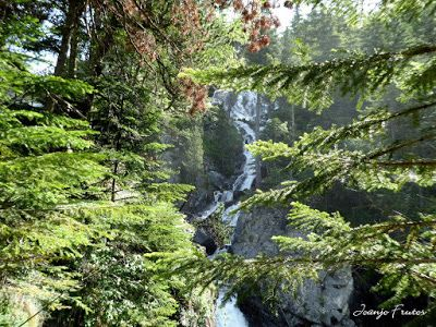 P1050820 - Botánico y Gorgues de Alba, Valle de Benasque (Pirineo)
