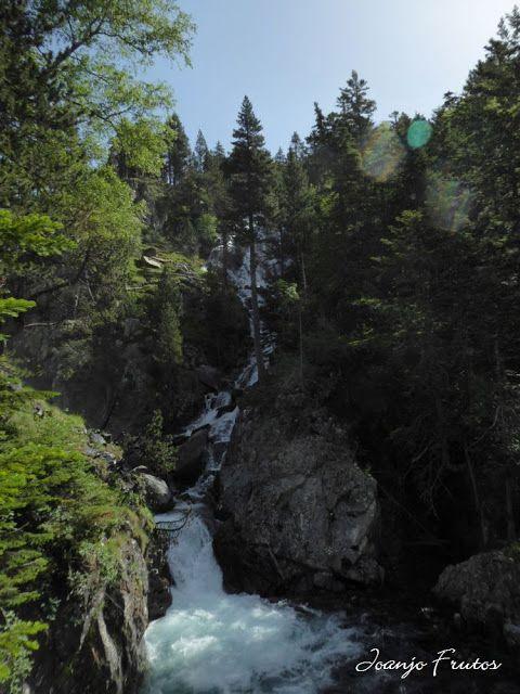 P1050823 - Botánico y Gorgues de Alba, Valle de Benasque (Pirineo)