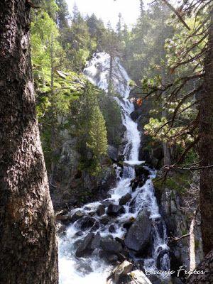 P1050851 - Botánico y Gorgues de Alba, Valle de Benasque (Pirineo)