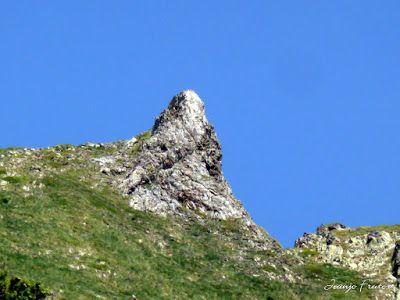 P1050877 - Botánico y Gorgues de Alba, Valle de Benasque (Pirineo)