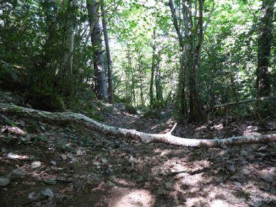 P1070528 - Sigo pedaleando, una semana con enduro, ahora Valle de Benasque.