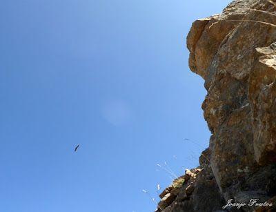 P1070686 - Pico Gallinero, Cerler (Valle de Benasque)