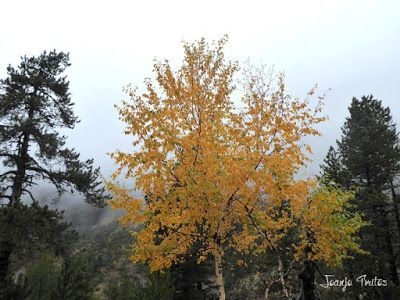 """P1080477 - Del """"veroño"""" a ver nieve de nuevo en el Valle de Benasque."""