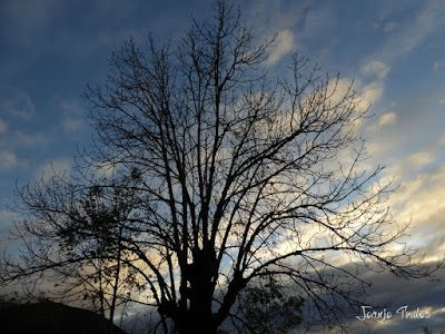 """P1080523 - Del """"veroño"""" a ver nieve de nuevo en el Valle de Benasque."""