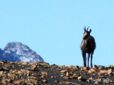 P1080733 - Enduro por Sierra Negra en Cerler, Valle de Benasque.
