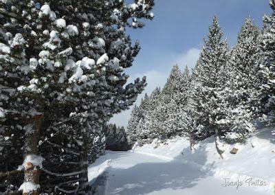 P1090721 - Diciembre empieza blanco en el Valle de Benasque.