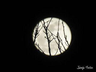 P1100718 - Cambio de mes con Luna Azul.