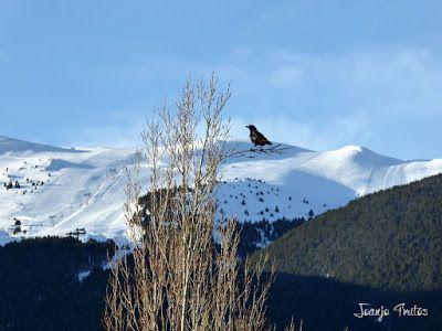 P1110803 - Cerler, Gallinero, Urmella, Arasán, se trata de esquiar ... Valle de Benasque.