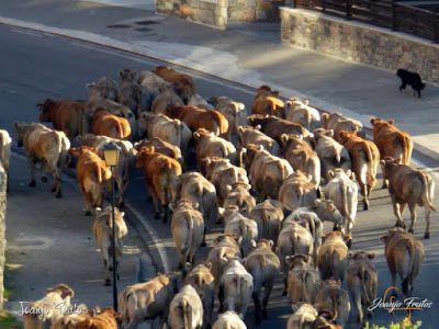 P1140007 - Nos acercamos a Maladetas, Valle de Benasque