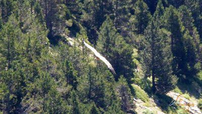 P1160679 - De buitres ... Sierra Negra.