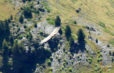 P1160681 - De buitres ... Sierra Negra.