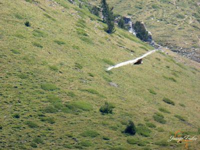 P1160684 - De buitres ... Sierra Negra.