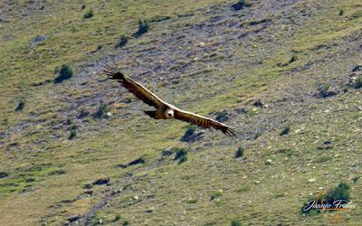 P1160685 - De buitres ... Sierra Negra.