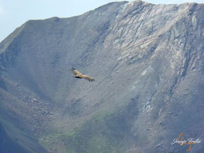 P1160690 - De buitres ... Sierra Negra.