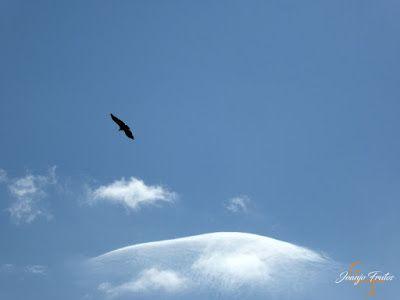 P1160694 - De buitres ... Sierra Negra.
