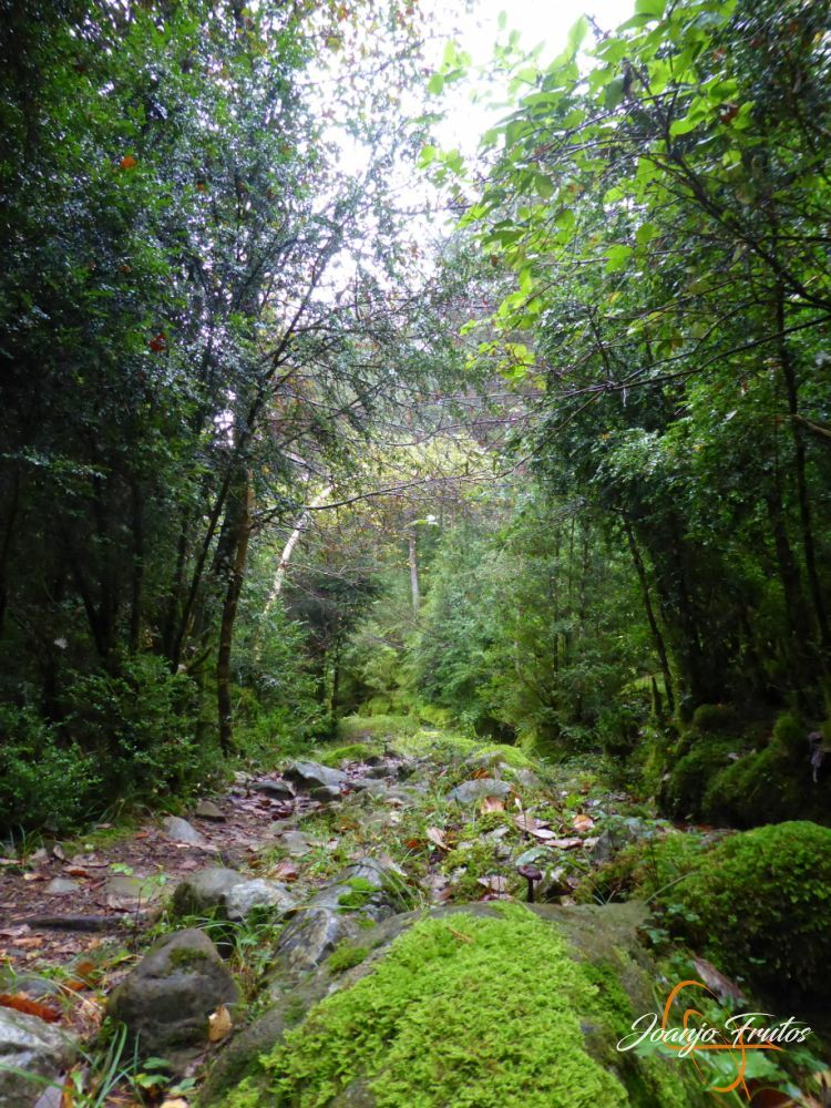 P1190642 - Paseo por la Aigüeta de Barbaruens.