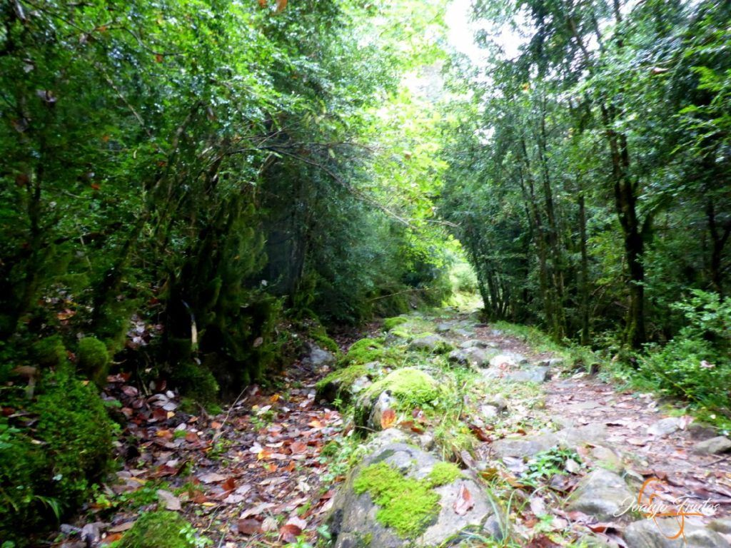 P1190643 1024x768 - Paseo por la Aigüeta de Barbaruens.