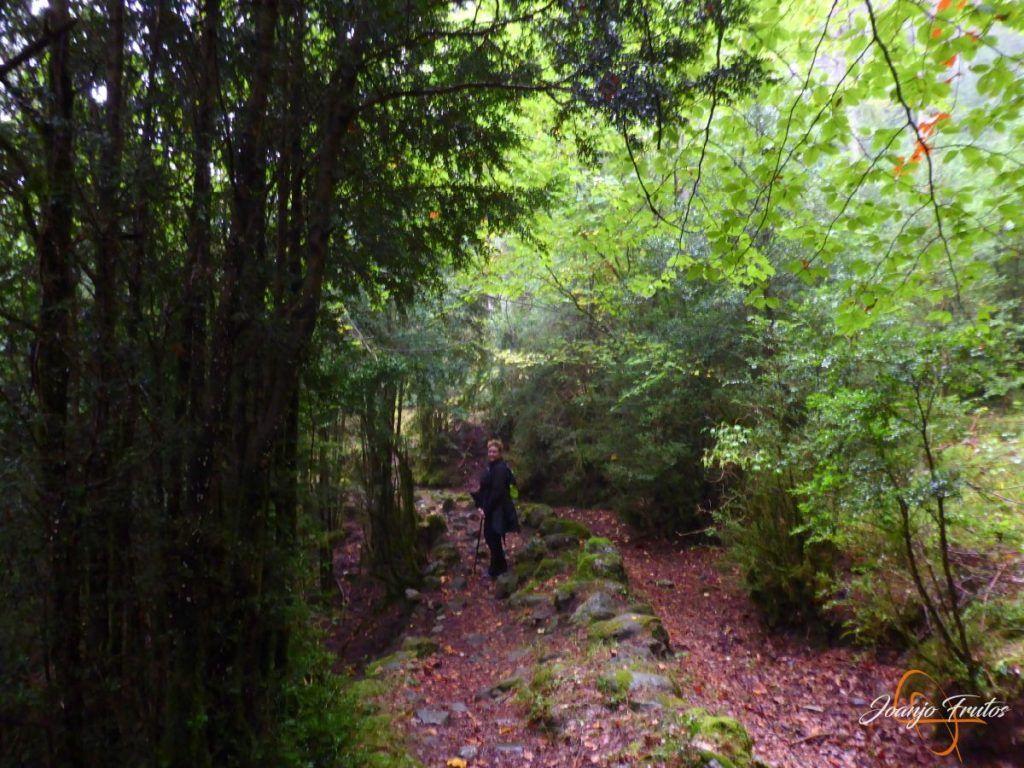 P1190645 1024x768 - Paseo por la Aigüeta de Barbaruens.