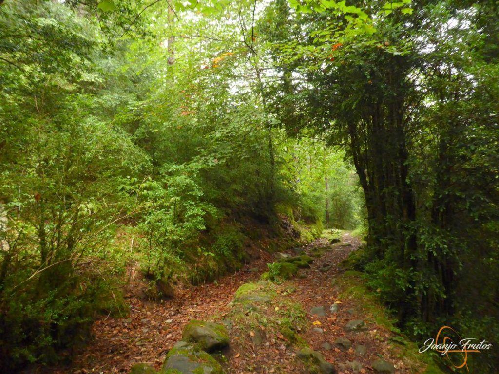 P1190647 1024x768 - Paseo por la Aigüeta de Barbaruens.