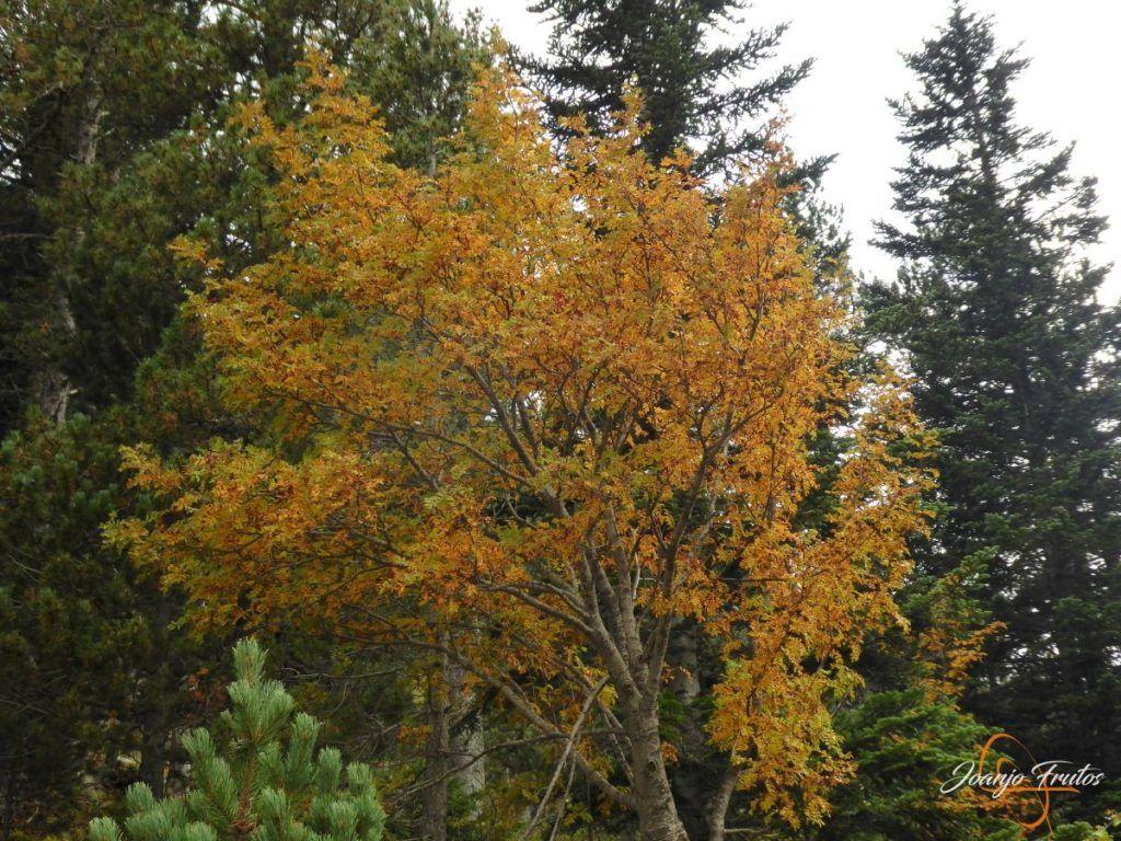 P1190789 1024x768 - Empezamos con colores de otoño, Valle de Benasque.