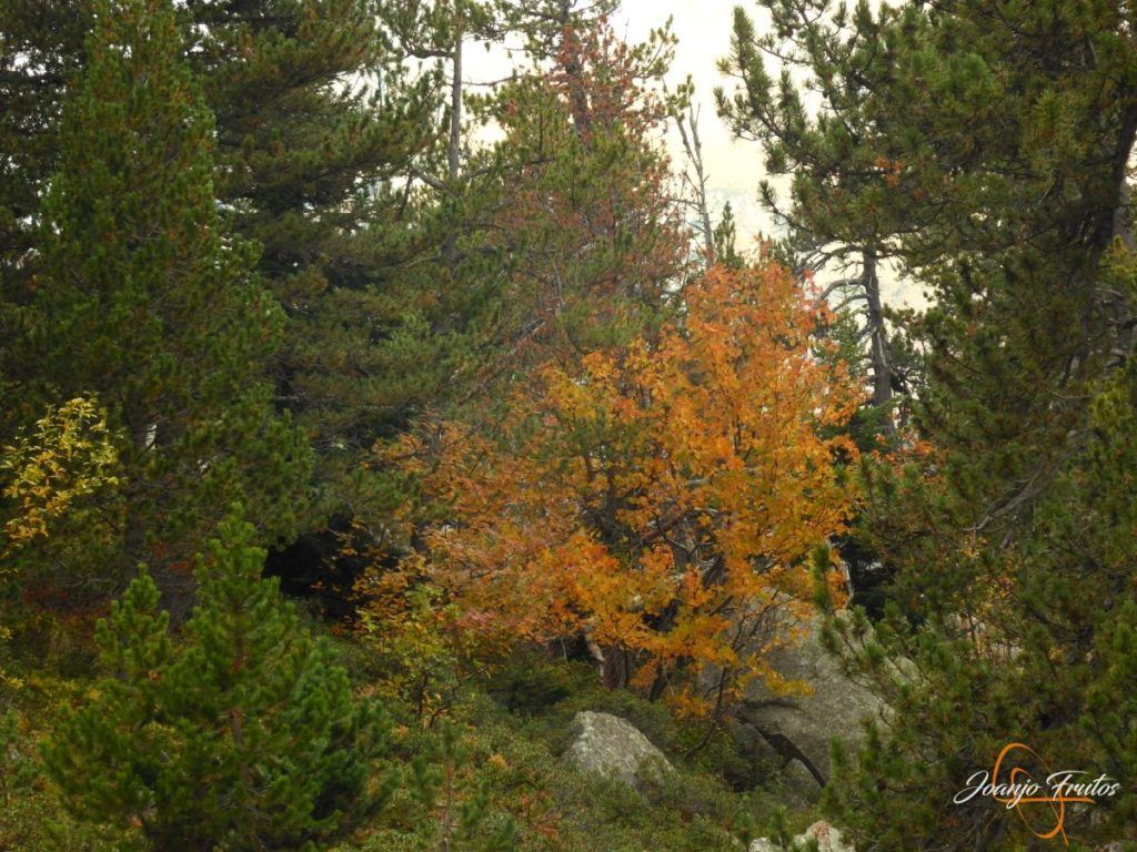 P1190790 1024x768 - Empezamos con colores de otoño, Valle de Benasque.