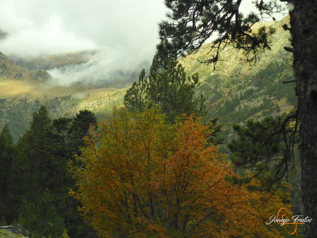 P1190795 1024x768 - Empezamos con colores de otoño, Valle de Benasque.