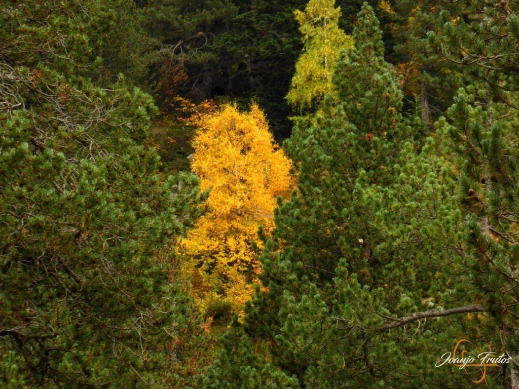 P1190796 1024x768 - Empezamos con colores de otoño, Valle de Benasque.