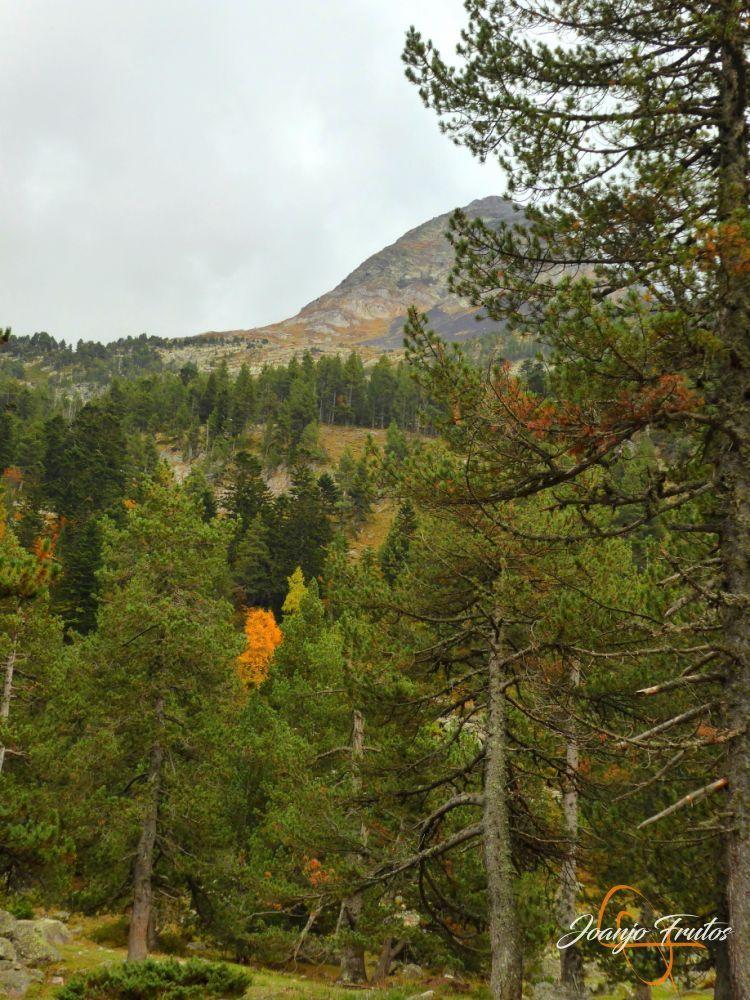 P1190797 - Empezamos con colores de otoño, Valle de Benasque.