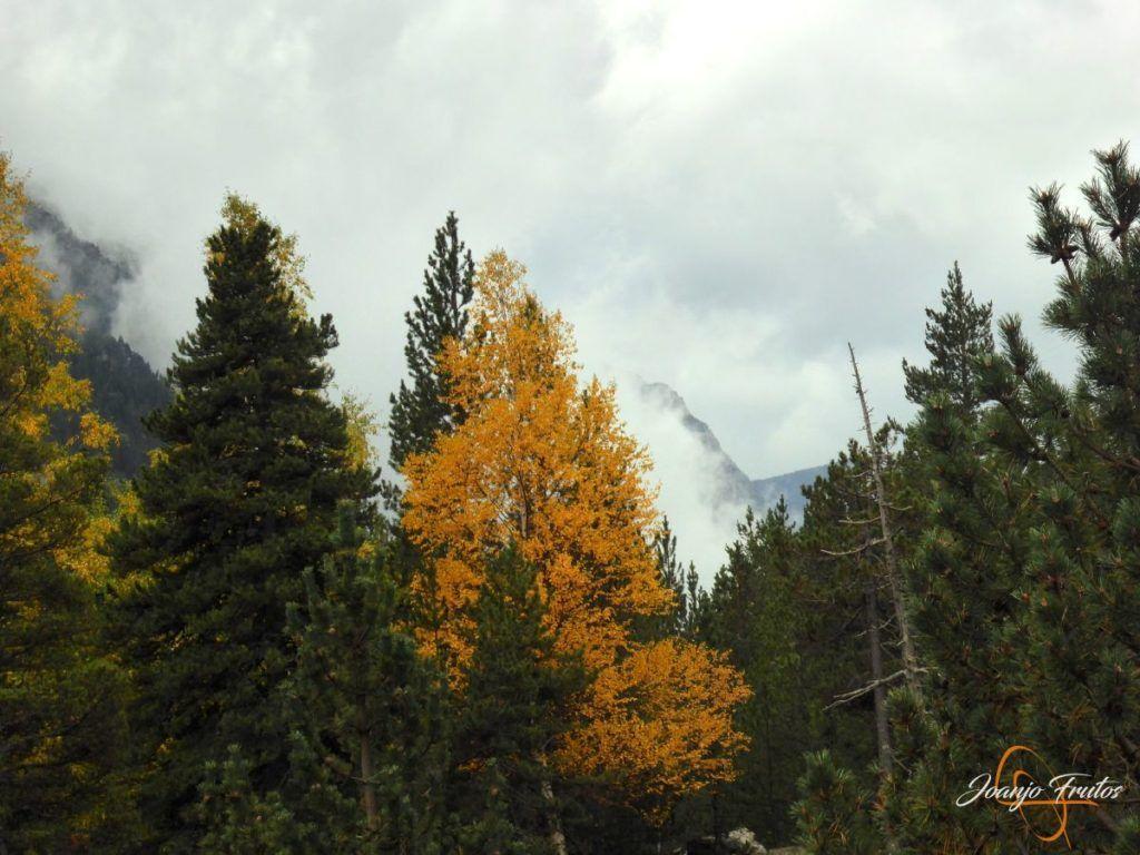 P1190802 1024x768 - Empezamos con colores de otoño, Valle de Benasque.