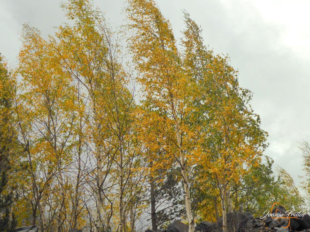 P1190807 - Empezamos con colores de otoño, Valle de Benasque.