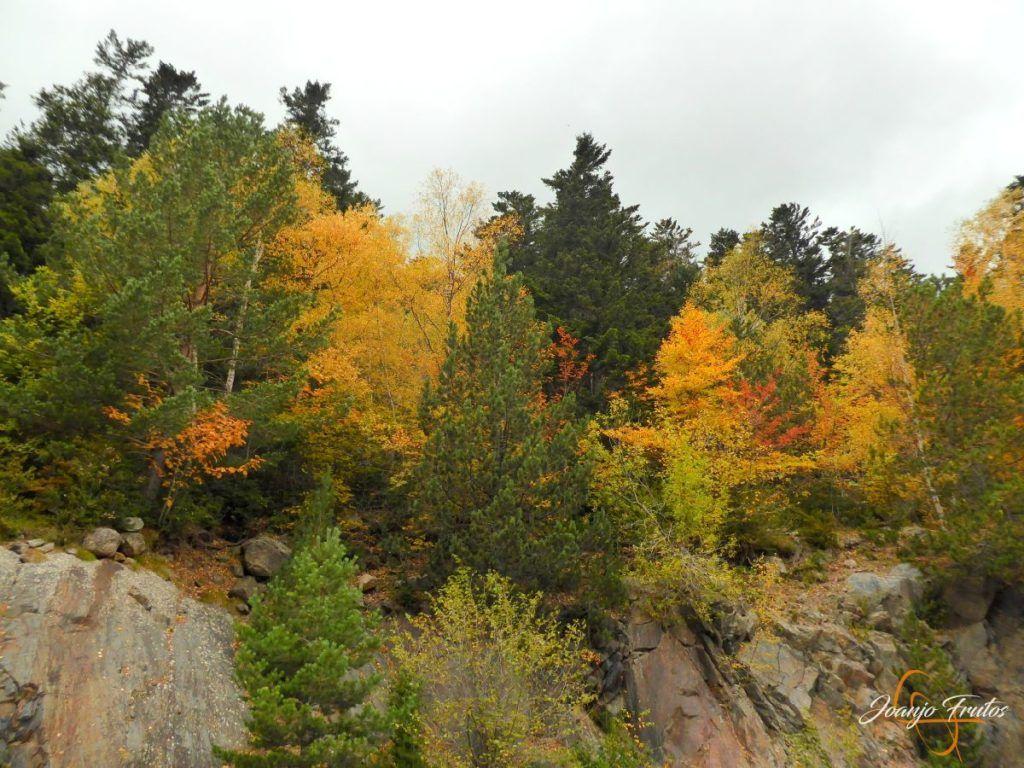 P1190809 1024x768 - Empezamos con colores de otoño, Valle de Benasque.