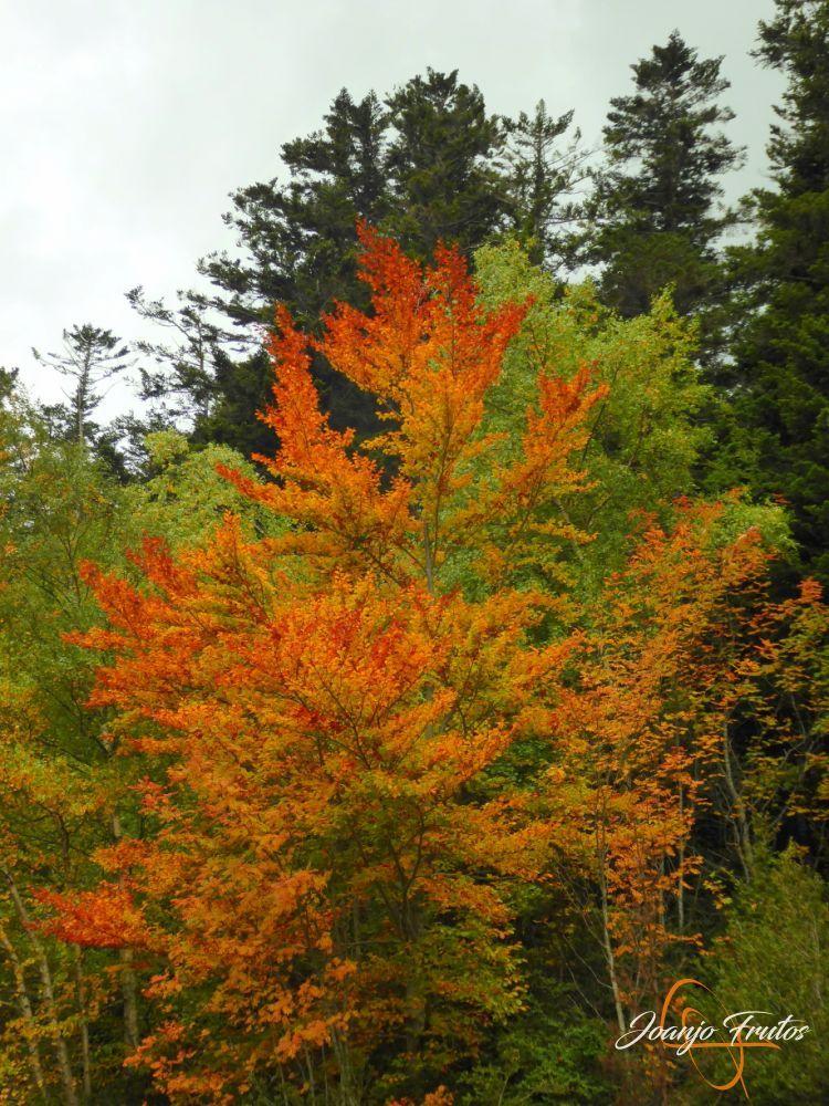 P1190811 - Empezamos con colores de otoño, Valle de Benasque.