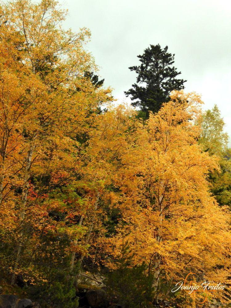 P1190812 - Empezamos con colores de otoño, Valle de Benasque.