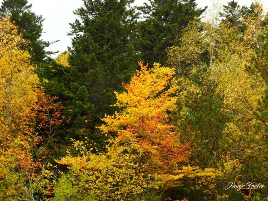 P1190814 1024x768 - Empezamos con colores de otoño, Valle de Benasque.