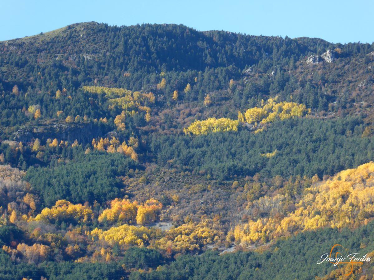 P1200998 - Veroño cerca de Castejón de Sos - Liri.